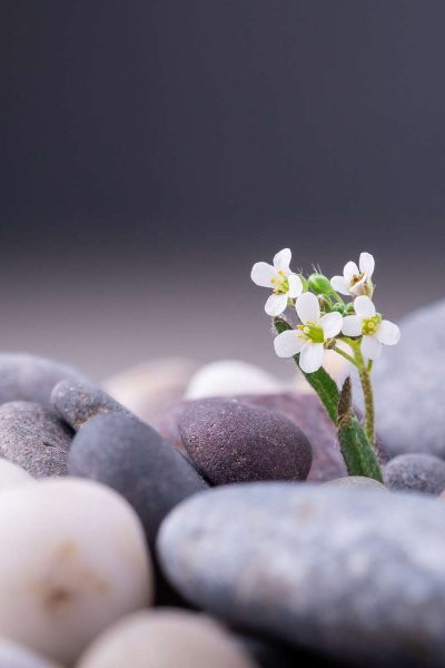 varied-pebbles-with-little-white-flower-angle-view.jpg